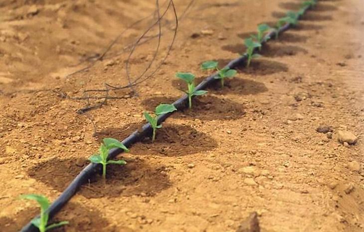 полив под корень капельной лентой